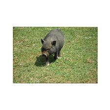 Pot Bellied Pig Rectangle Magnet