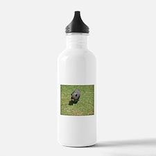 Pot Bellied Pig Water Bottle