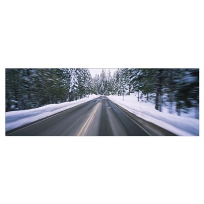Trees with snow on both sides of a road, Yosemite Poster
