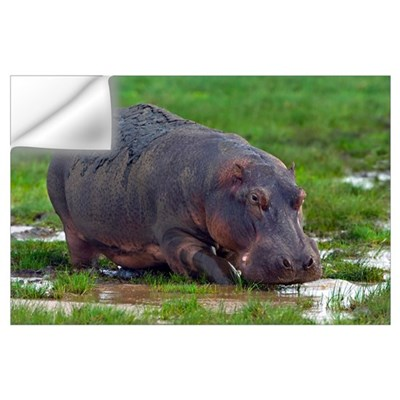 Close-up of a hippopotamus, Lake Manyara, Arusha R Wall Decal