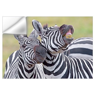 Close-up of two zebras, Ngorongoro Crater, Ngorong Wall Decal