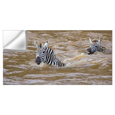 Two Zebras swimming in a river, Mara River, Masai Wall Decal