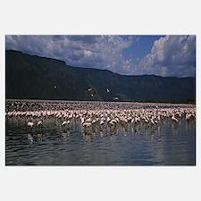 Flock of flamingos in a lake, Lake Bogoria, Kenya