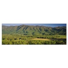 Forest on a hillside, Cades Cove, Great Smoky Moun Poster