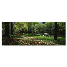 Flowers in a park, Central Park, Manhattan, New Yo Framed Print
