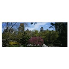 Trees in a park, Central Park, Manhattan, New York Poster