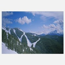 High angle view of evergreen trees on mountains co