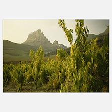 Vineyard on a landscape, La Rioja, Cellorigo, Spai