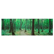 Michigan, Black River National Forest, Walkway run Framed Print