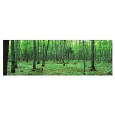 Michigan, Black River National Forest, Trees in a  Poster