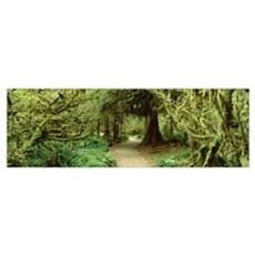Path Hoh Rain Forest Olympic National Park WA Framed Print