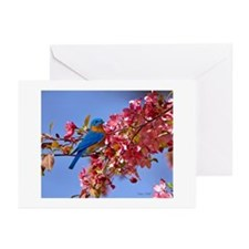 Bluebird in Blossoms Greeting Cards (Pk of 10)