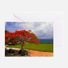 Flamboyant Tree Greeting Cards (Pk of 10)