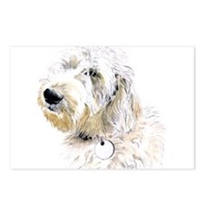Butters the Labradoodle Postcards (Package of 8)