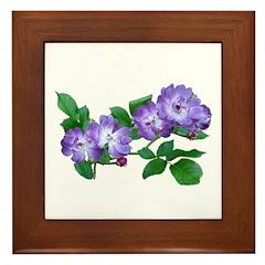 Blue Climbing Roses Framed Tile
