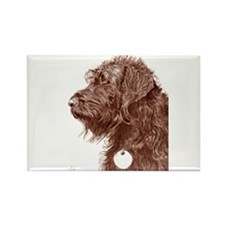 Chocolate Labradoodle 4 Rectangle Magnet (10 pack)