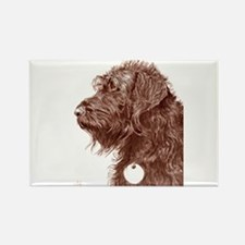 Chocolate Labradoodle 4 Rectangle Magnet