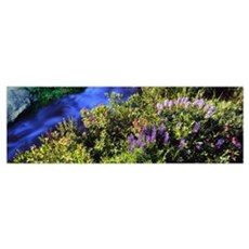 High angle view of Lupine and Spirea flowers near  Poster