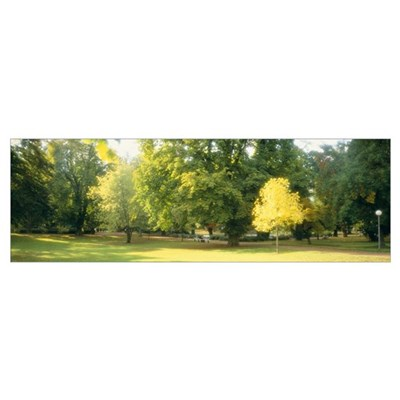 Trees in a park, Wiesbaden, Rhine River, Germany Poster