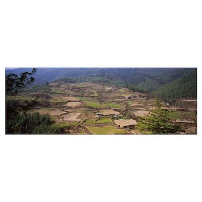 Aerial view of a farmhouse in a field, Paro, Bhuta Poster
