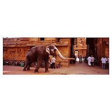 Elephant walking on the street, Tamil Nadu, India Poster