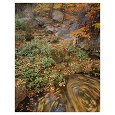 High angle view of plants in a forest, Workman Cre Poster