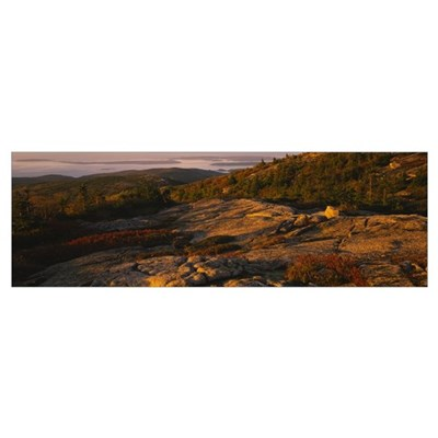 Trees on a landscape, Cadillac Mountain, Acadia Na Poster