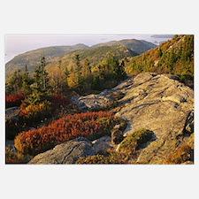 Trees on a landscape, Cadillac Mountain, Acadia Na