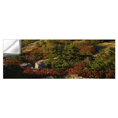 Trees on a landscape, Cadillac Mountain, Acadia Na Wall Decal