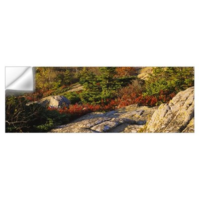 Trees on a hillside, Cadillac Mountain, Acadia Nat Wall Decal