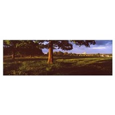 Trees on a landscape, Beverley Westwood, Beverley, Poster