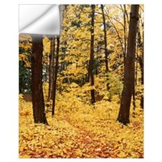 New York State, Erie County, Emery Park, Forest co Wall Decal