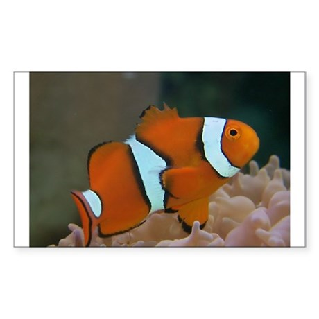 True Percula Clownfish Rectangle Sticker