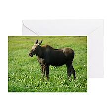 Cow Moose #01 Greeting Card