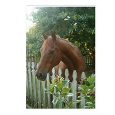 Jericho Postcards (Package of 8) Horse Rescue