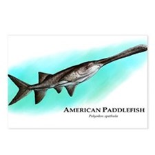 American Paddlefish Postcards (Package of 8)