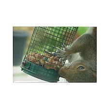 Squirrel on bird feeder Rectangle Magnet