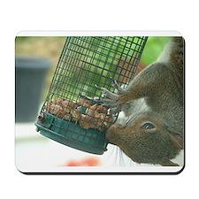 Squirrel on bird feeder Mousepad