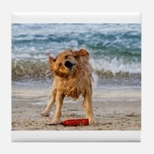 Golden Retriever 4 Tile Coaster