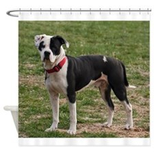 Bully Dogs 2 Shower Curtain