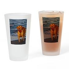 Golden Retriever 7 Drinking Glass