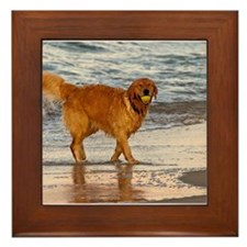 Golden Retriever 8 Framed Tile