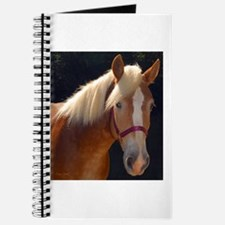 Sunlit Horse Journal