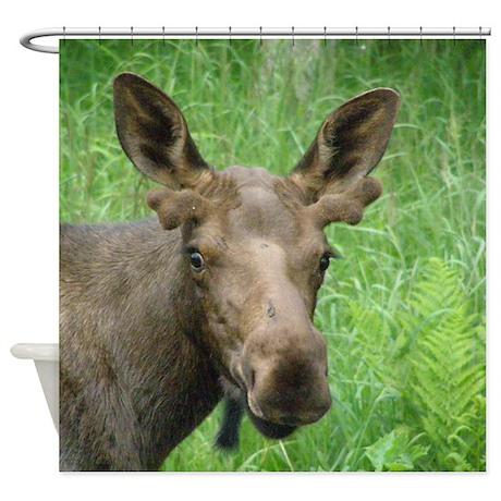Bull Moose #03 Shower Curtain