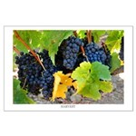 Dark Purple Grapes at Harvest, Wine Country Poster