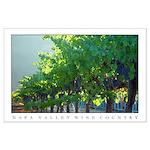 Backlit Vineyard - NAPA VALLEY WINE COUNTY -