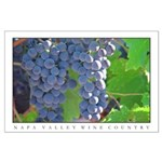 """""""NAPA VALLEY WINE COUNTRY"""" LG Poster"""