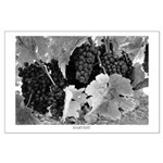Black and White Grapes at Harvest Poster