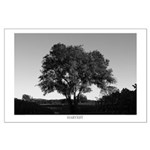 Black and White Harvest - The Tree in a Vineyard