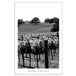 Black and White Tree in the Vineyard Large Poster